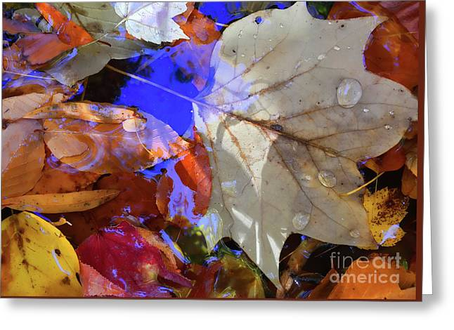 Soft Light Leaves Greeting Card