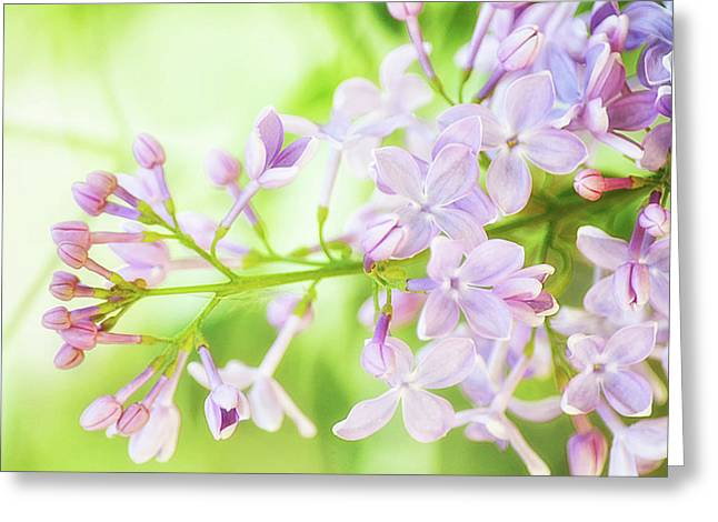 Soft Lilac Greeting Card by Camille Lopez