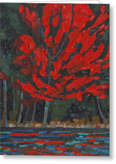 Soft Maple Shore Greeting Card by Phil Chadwick