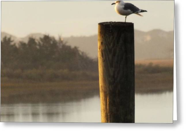 Sea Birds Greeting Cards - Soft Mornings Greeting Card by Karen Wiles