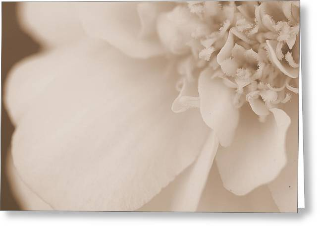 Soft Petals Greeting Card by Christine Ricker Brandt