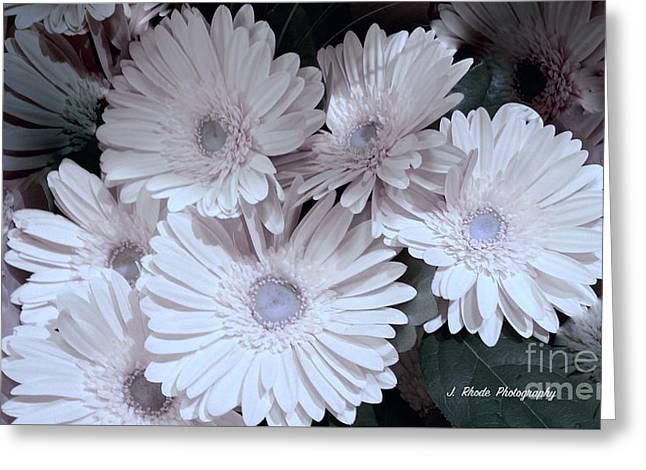 Soft Pink Daisy Bouquet Greeting Card by Jeannie Rhode