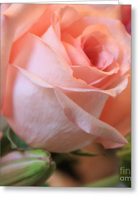 Soft Pink Rose Greeting Card by Carol Groenen