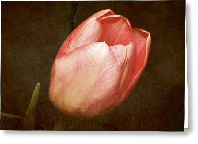 Soft Pink Tulip Greeting Card by Cathie Tyler