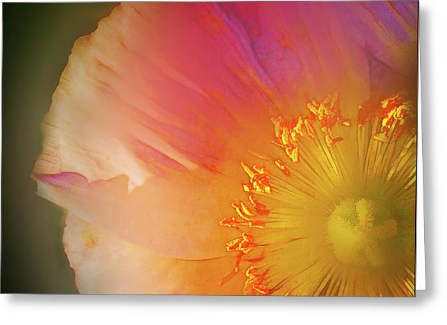 Soft  Poppy Whisper Greeting Card