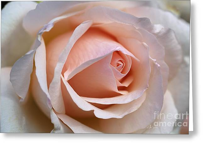 Soft Rose Greeting Card by Joy Watson