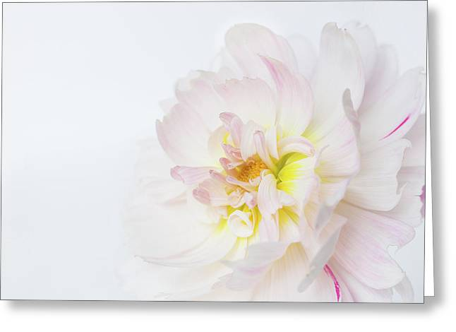 Greeting Card featuring the photograph Soft Ruffles by Mary Jo Allen