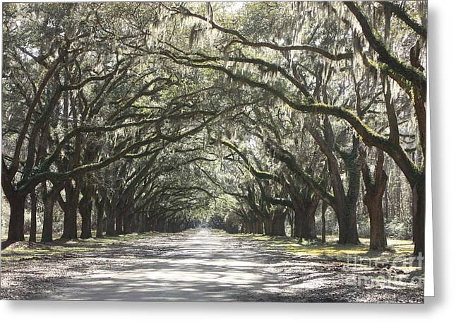 Soft Southern Day Greeting Card by Carol Groenen