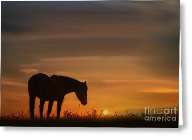 Soft Southwestern Sunrise Greeting Card by Stephanie Laird