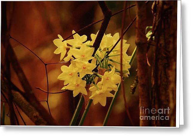 Soft Tangled Beauty  Greeting Card by Kim Pate
