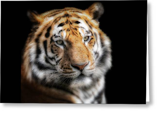 Soft Tiger Portrait Greeting Card by Chris Boulton