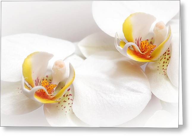 Soft White Orchid Pair Greeting Card by Gill Billington