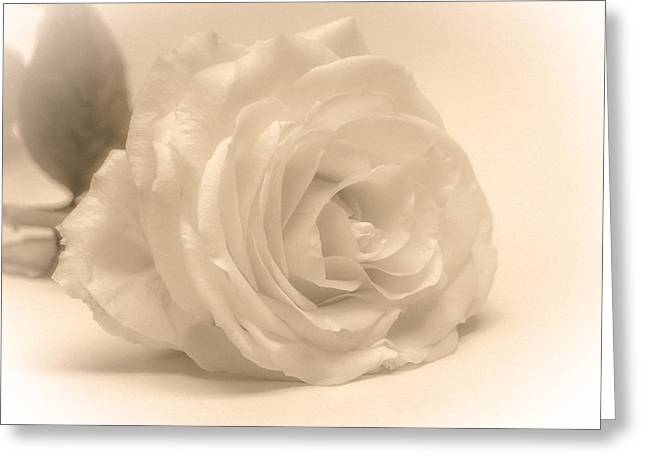 Greeting Card featuring the photograph Soft White Rose by Scott Carruthers