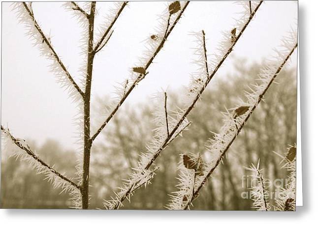 Soft Winter Sepia Branches Greeting Card