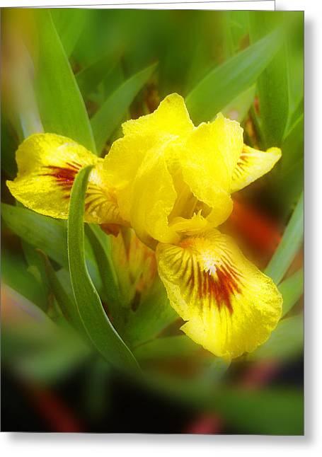 Soft Yellow Iris Greeting Card