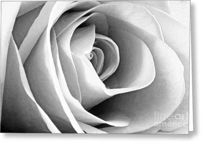 Softened Rose Greeting Card