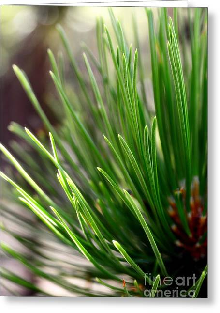 Softer Side Of Pine Greeting Card