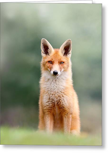 Softfox - Red Fox Sitting Greeting Card by Roeselien Raimond