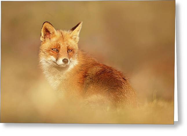 Softfox Series - Red Fox Blending In Greeting Card by Roeselien Raimond