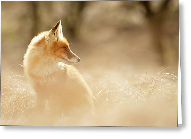 Softfox Series - Sunshine Fox Greeting Card