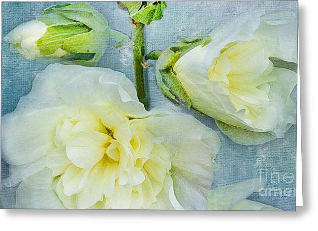 Greeting Card featuring the photograph Softly by Betty LaRue
