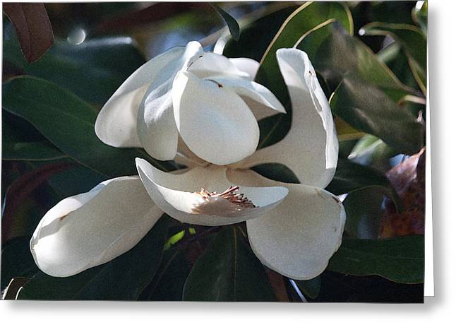 Softly Gracefully Greeting Card by Suzanne Gaff