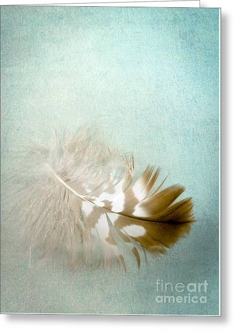 Softly Greeting Card by Jan Bickerton