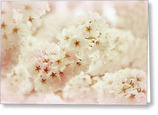 Softly Greeting Card by Jessica Jenney