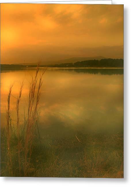 Softly Greeting Card by Nina Fosdick