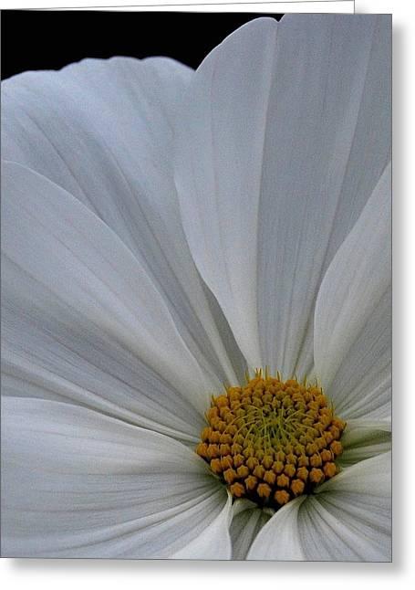Softly White Greeting Card by Marilynne Bull