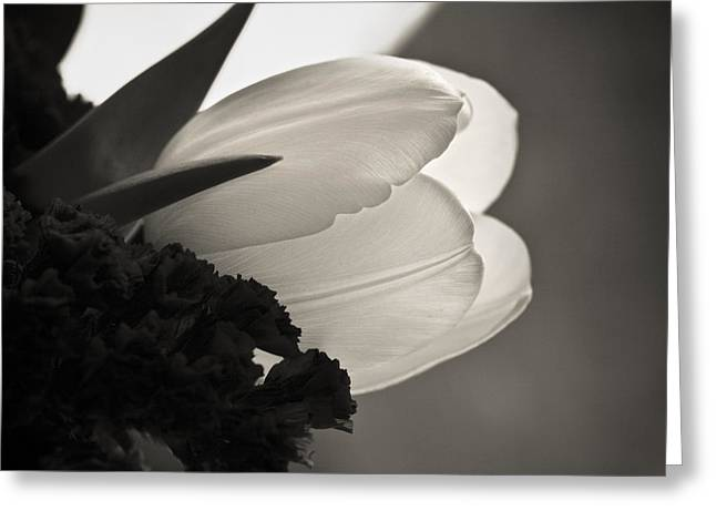 Lit Tulip Greeting Card by Marilyn Hunt
