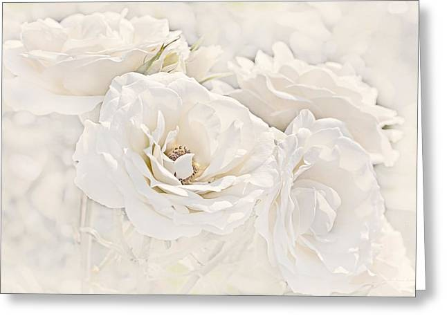 Softness Of Ivory Roses Greeting Card