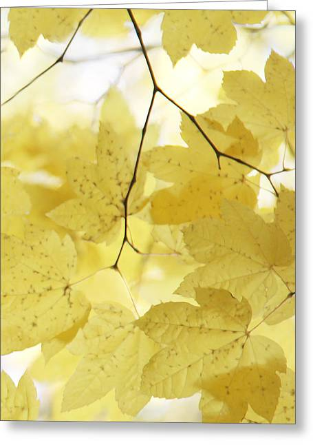 Softness Of Yellow Leaves Greeting Card by Jennie Marie Schell