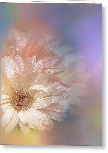 Softness Receding Greeting Card by Terry Davis