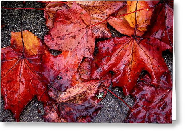 Soggy Leaves Greeting Card by Sonja Anderson