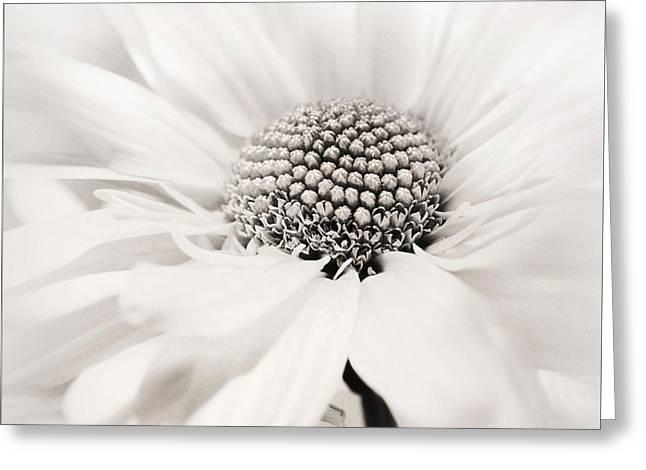 Greeting Card featuring the photograph Soiree In Black N White by Darlene Kwiatkowski