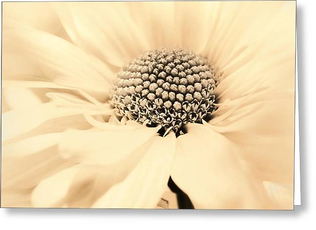 Greeting Card featuring the photograph Soiree In Creamy Yellow by Darlene Kwiatkowski