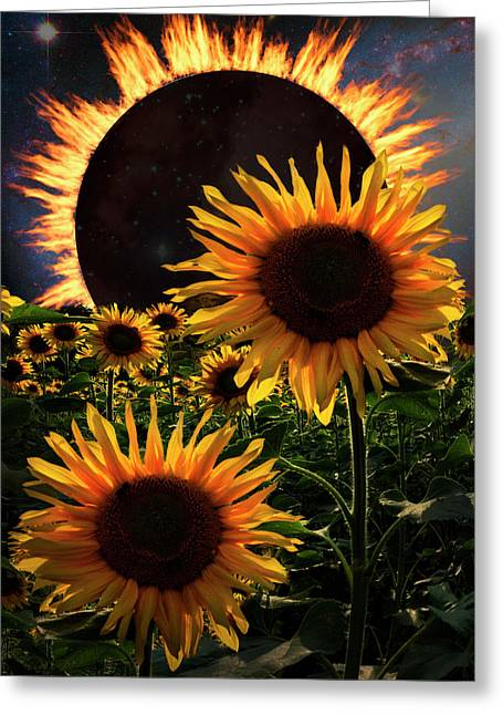 Solar Corona Over The Sunflowers Greeting Card