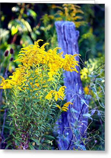 Solidago Greeting Card