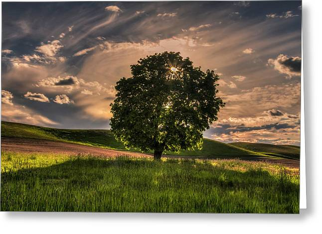 Solitarty Backlit Tree In The Palouse Greeting Card