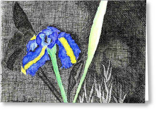 Solitary Iris Greeting Card by Saundra Lee York