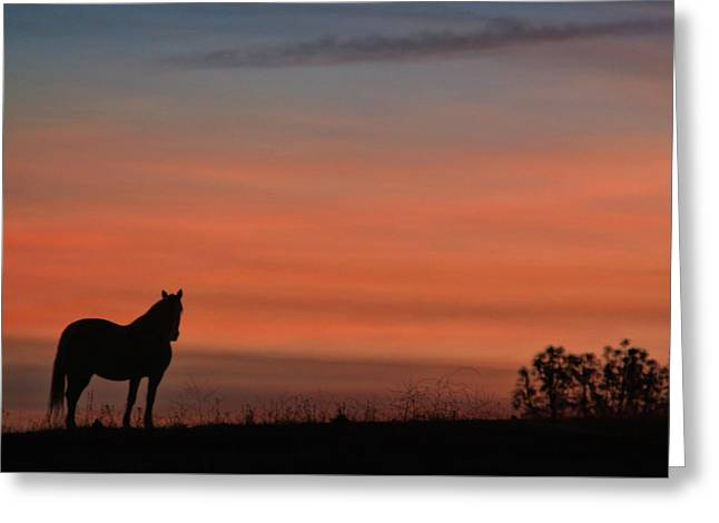 Solitary Morning Greeting Card by Stephanie Laird