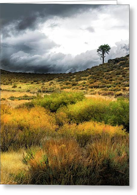 Greeting Card featuring the photograph Solitary Pine by Frank Wilson