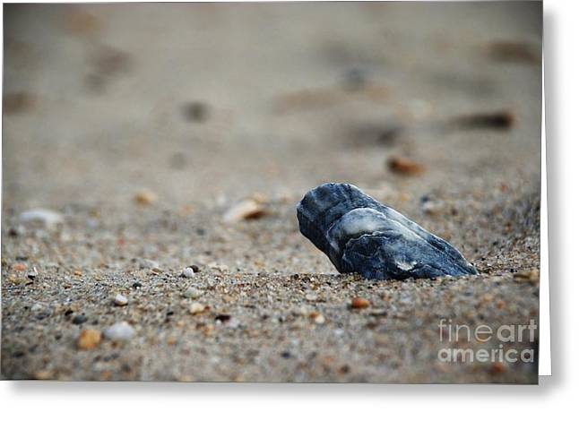 Solitary Shell Greeting Card by Joseph Perno