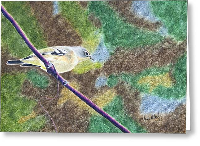 Solitary Vireo Greeting Card