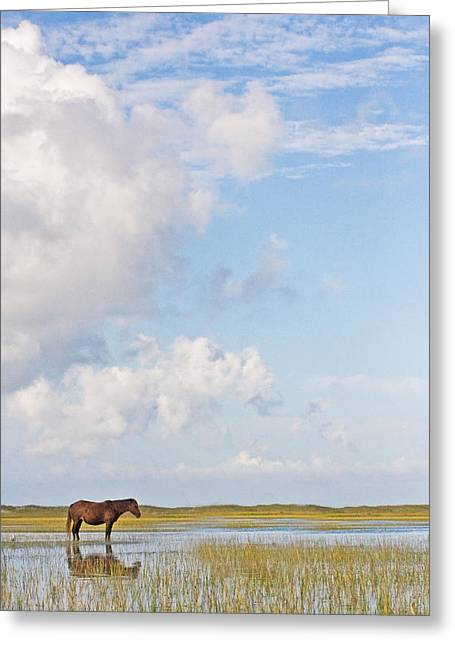 Solitary Wild Horse Greeting Card