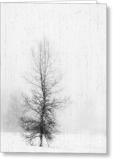Greeting Card featuring the photograph Solitude  by Alana Ranney