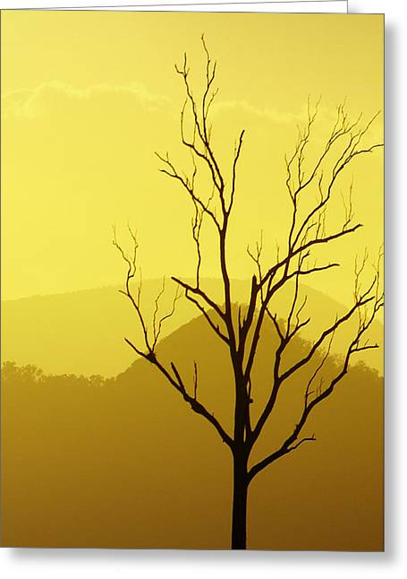 Solitude Greeting Card by Holly Kempe