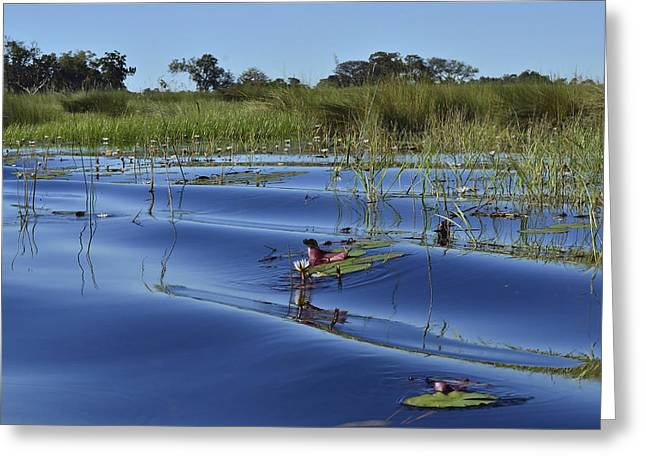 Solitude In The Okavango Greeting Card