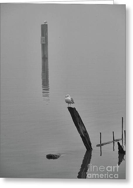 Solitude Peaceful  Greeting Card by Chuck Kuhn